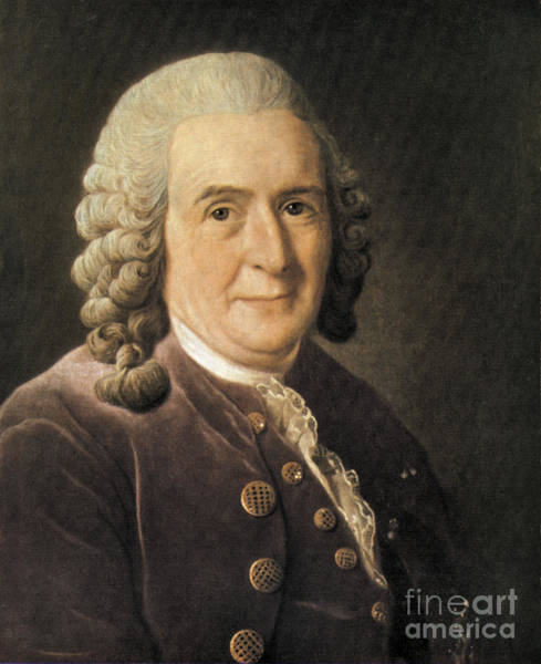 Notable Photograph - Carl Linnaeus, Swedish Botanist by Science Source