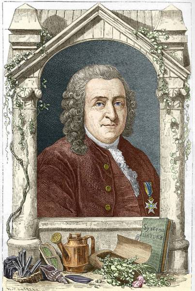 Creationist Wall Art - Photograph - Carl Linnaeus, Swedish Botanist by Sheila Terry