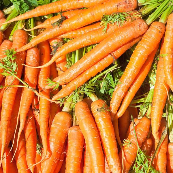 Closeup Wall Art - Photograph - Carrots by Tom Gowanlock