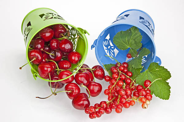 Currants Photograph - Cherries And Currants by Joana Kruse