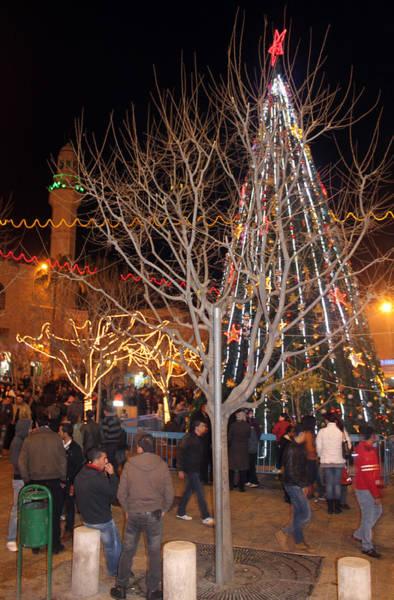 Manger Photograph - Christmas Tree At Manger Square  by Munir Alawi