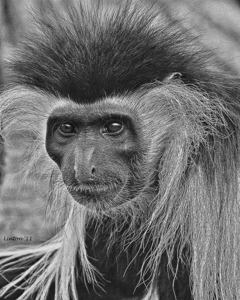 Digital Art - Colobus Monkey by Larry Linton