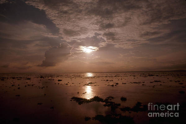 Photograph - Congo: Congo River by Granger