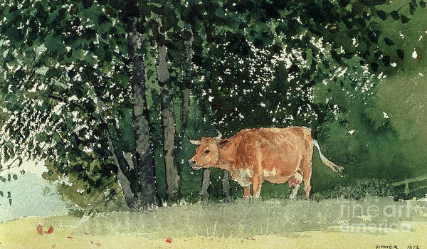 Dairy Painting - Cow In Pasture by Winslow Homer