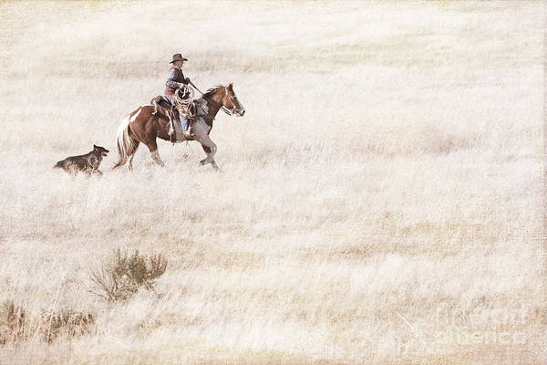 Photograph - Cowboy And Dog by Cindy Singleton