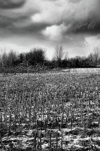 Photograph - Crop Field In Early Winter After First Snow by Sandra Cunningham