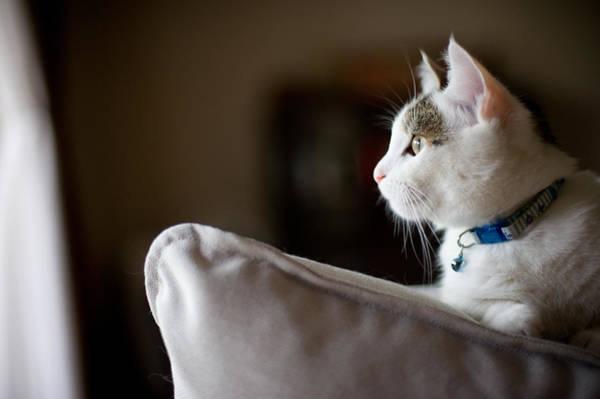 Okayama Prefecture Photograph - Curious Cat by Nazra Zahri