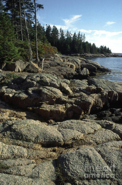 Wall Art - Photograph - Deer Isle Shoreline by Thomas R Fletcher