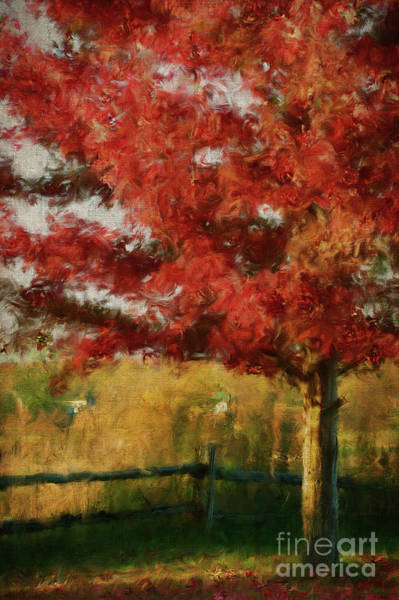 Wall Art - Photograph -  Maple Tree In Full Color/digital Painting  by Sandra Cunningham