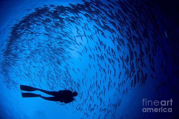 Photograph - Diver And A Large School Of Bigeye by Steve Jones