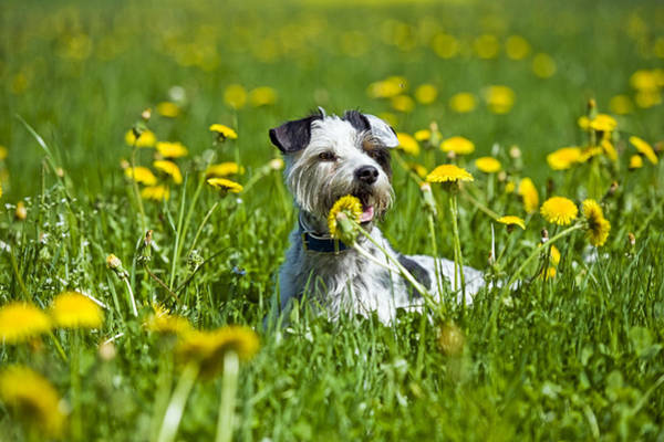 Wall Art - Photograph - Dog Lying In Meadow by Stock4b-rf