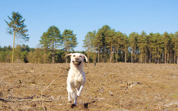 Big Dog Photograph - Dog by Tom Gowanlock
