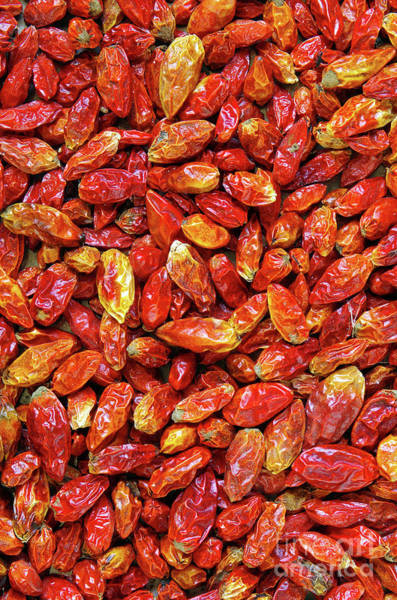 Asian Food Photograph - Dried Chili Peppers by Carlos Caetano