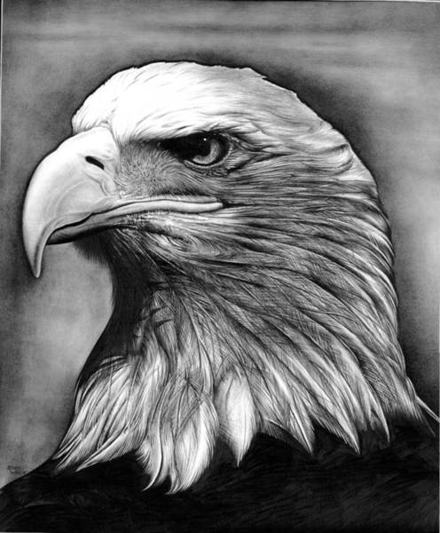 Bald Eagles Drawing - Eagle by Jerry Winick