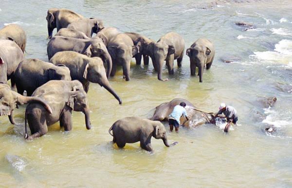Photograph - Elephant Bath by Paul Cowan