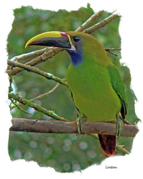 Photograph - Emerald Toucanet by Larry Linton
