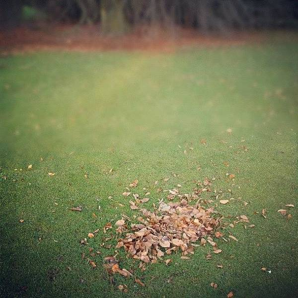 Brown Wall Art - Photograph - Empty Lawn With A Little Heap Of Leaves Scraped Together by Matthias Hauser
