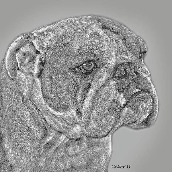 Digital Art - English Bulldog by Larry Linton