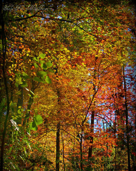 Photograph - Fall In North Carolina by Sheila Kay McIntyre