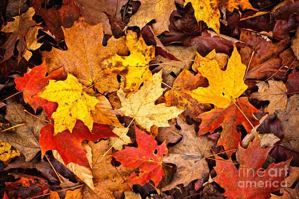 Fall Leaves Background Art Print