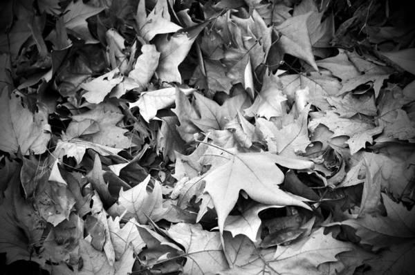 Photograph - Fallen Leaves by Fabrizio Troiani