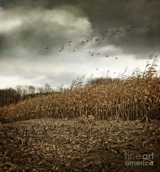 Photograph - Farm Fields Of Autumn Corn Getting Cut For Winter by Sandra Cunningham