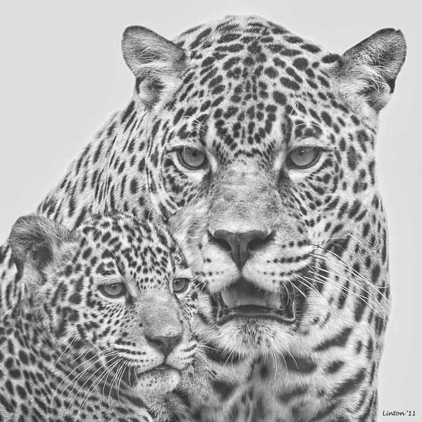 Digital Art - Female Jaguar And Cub by Larry Linton