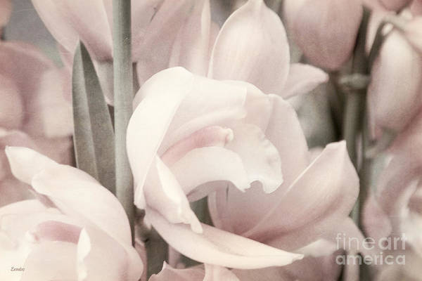 Photograph - Flower Dream by Eena Bo