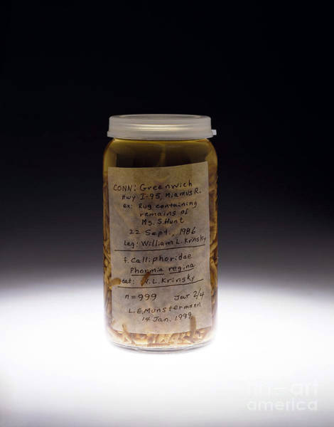 Photograph - Forensics, Entomological Evidence by Science Source