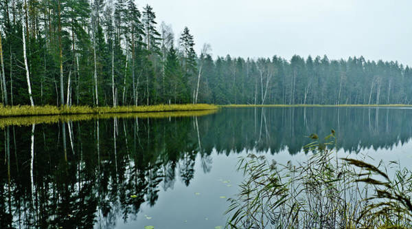 Photograph - Forest Lake by Michael Goyberg