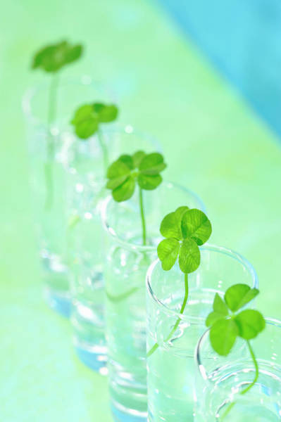 Four Leaf Clover Photograph - Four Leaf Clover,in The Glass Bottle. by Yagi Studio