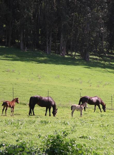 Photograph - Grace's Horses by Cynthia Marcopulos