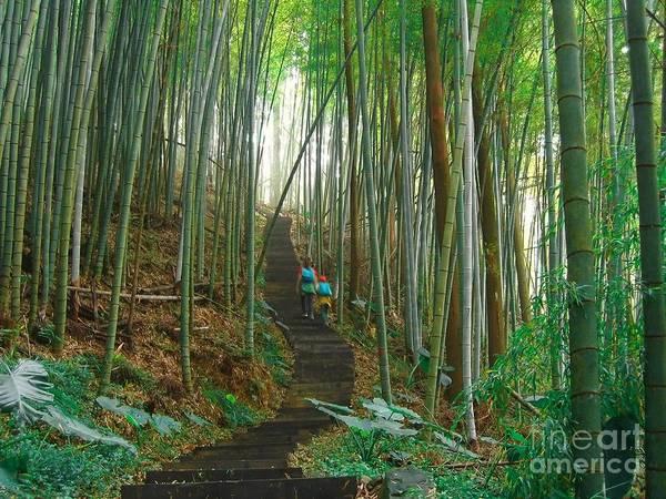 Bamboo Shoots Photograph - Green Bamboo Forest by Yali Shi