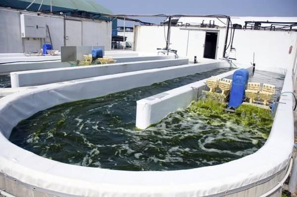 Kibbutz Photograph - Growing Algae For Fish Food by Photostock-israel