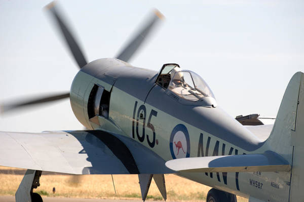 Hawker Sea Fury Photograph - Hawker Sea Fury by Gary Rose