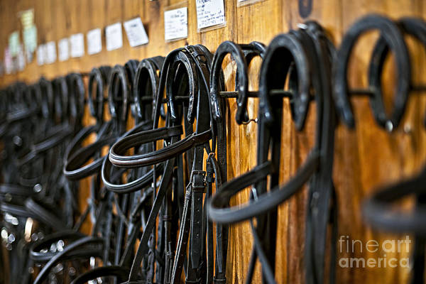 Wall Art - Photograph - Horse Bridles Hanging In Stable by Elena Elisseeva