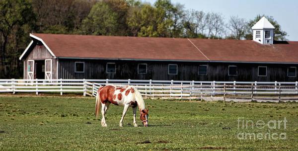 Photograph - Horse by John Rizzuto
