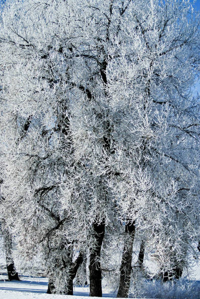 Photograph - Iced by Colleen Coccia