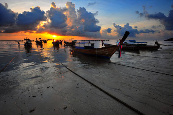 Phi Photograph - In The Morning Light by Bernard Chen