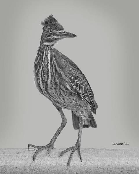 Digital Art - Juvenile by Larry Linton