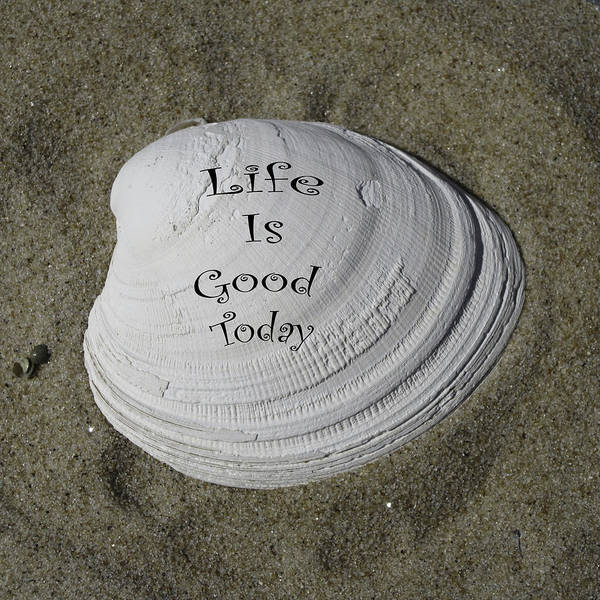 Photograph - Life Is Good Today by Trish Tritz