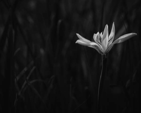 Photograph - Lily by Mario Celzner