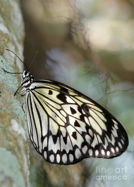 Photograph - Magical Butterfly by Sabrina L Ryan