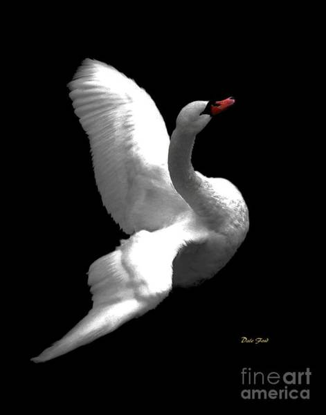 Digital Art - Majestic Swan 3 by Dale   Ford