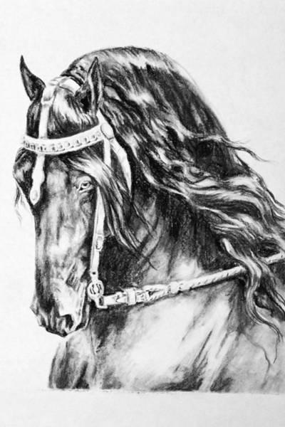 Friesian Drawing - Mintse by Jennifer  Vanderploeg