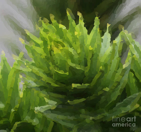 Wall Art - Painting - Monkey Puzzle Tree by Heinz G Mielke