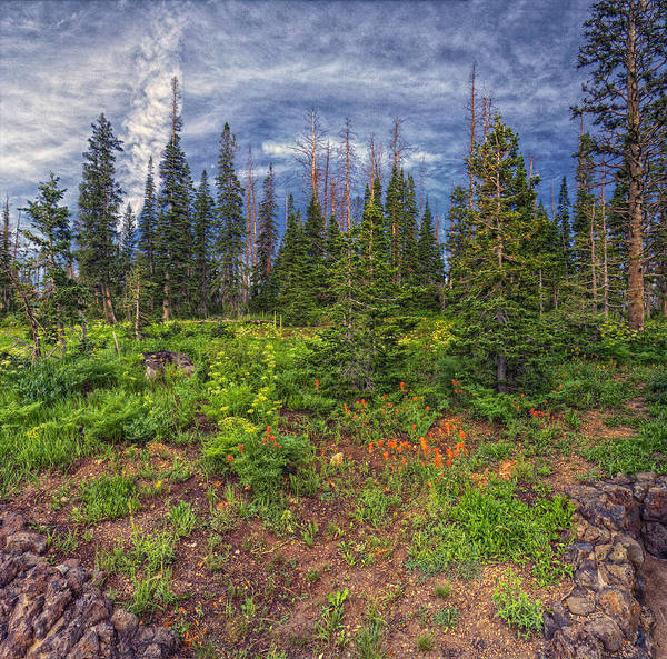 Cedar Breaks Photograph - Morning Pines by Stephen Campbell