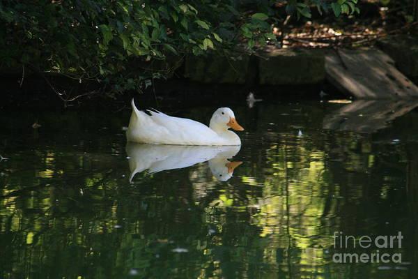 Water Birds Wall Art - Photograph - My Zen Moments by Valia Bradshaw