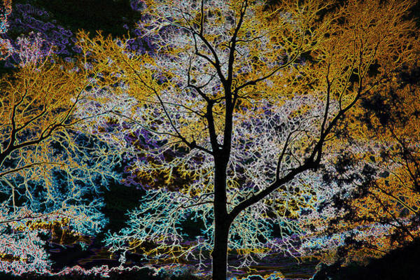 Photograph - Mysterious Glowing Trees by Sheila Kay McIntyre
