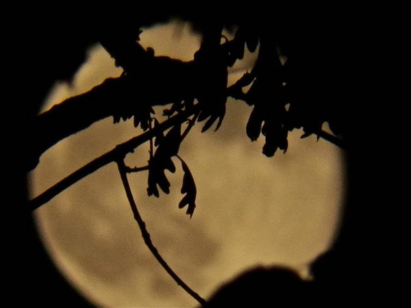 Wall Art - Photograph - Mystic Moon by Gloria Warren